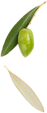 Green olive and two leaves