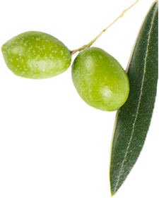 Two green olives in an olive branch
