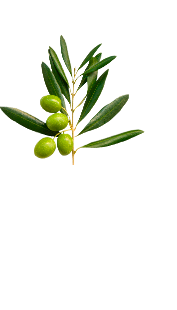 Top olive branch in La Española Extra Virgin Olive Oil Variety