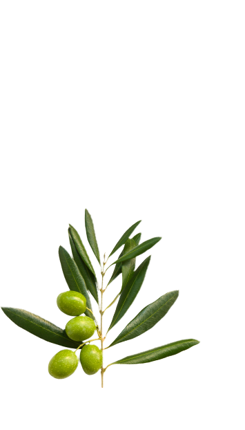 Olive branch in La Española Light in Colour Olive Oil Variety