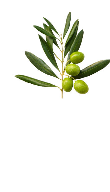 Top olive branch in La Española Pure Olive Oil Variety