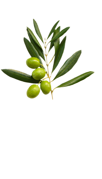 Olive branch in La Española flavoured olive oil Variety page